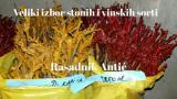 Lozni kalemovi u ponudi stone i vinske sorte grožđa A6KPg