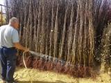 Vocne sadnice sa garancijom kvaliteta BAfGu