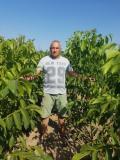 Prodaja vocnih sadnica - Niske cene visok kvalitet QCsoV