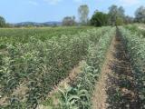 Rezervišite voćne sadnice na vreme - 30% popusta UNdna