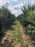 Prodajem vocnjak u punom rodu (visnja i tresnja) UQEeY